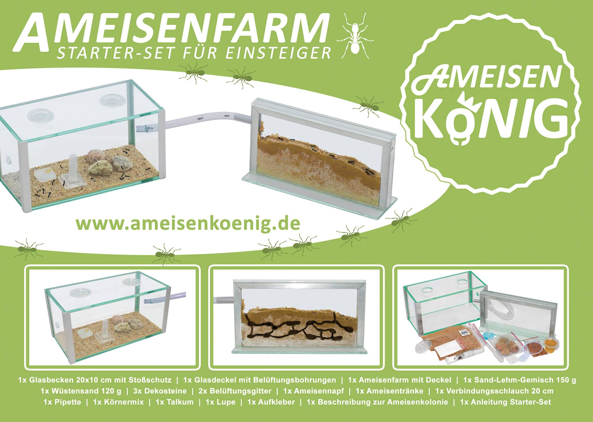 Ameisenfarm mit ameisen